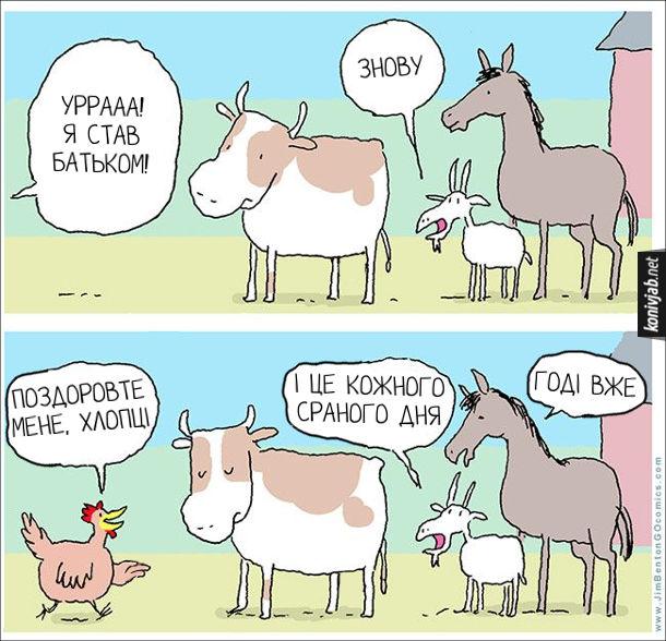 Смішний малюнок про півня. На подвір'ї стоять бик, цап і кінь. До них підходить півень: - Уррааа! Я став батьком. Цап: - Знову. Півень: - Поздоровте мене, хлопці. Цап: - І це кожного сраного дня. Кінь: - Годі вже