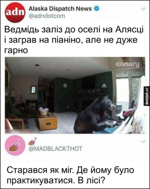Прикол про ведмедя. Новина Alaska Dispatch News: Ведмідь заліз до оселі на Алясці і заграв на піаніно, але не дуже гарно. Комент: Старався як міг. Де йому було практикуватися. В лісі?