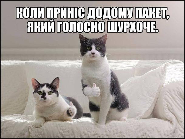 Жарт про котів. Коли приніс додому пакет, який голосно шурхоче. Два коти показують великий палець догори