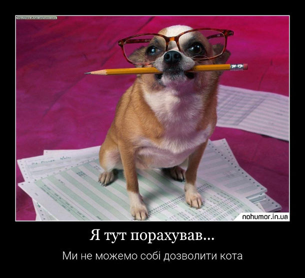 Смішний песик в окулярах і олівцем в зубах: - Я тут порахував... Ми не можемо собі дозволити кота