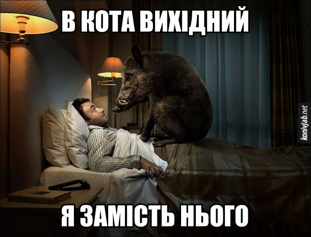 Прикол. Чоловік прокинувся в ліжку, а на животі в нього  сидить дикий кабан і каже: - В кота вихідний. Я замість нього