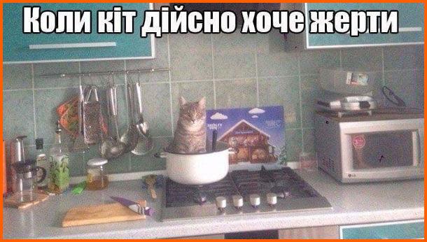 Прикол Кіт голодний. Коли кіт дійсно хоче жерти, сів в каструлю на плиті