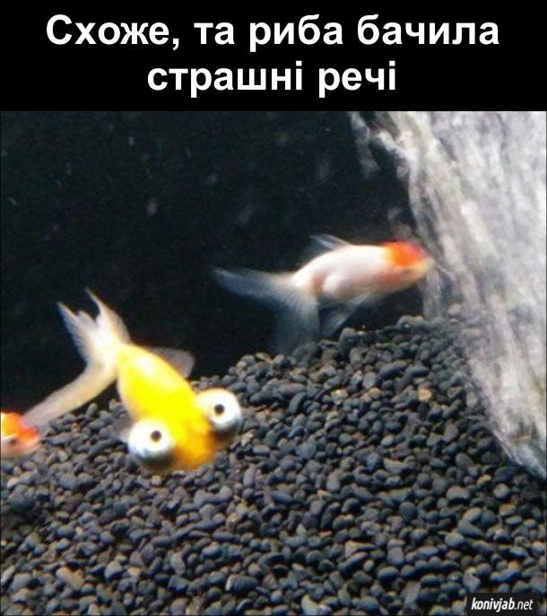 Смішна риба з виряченими очима. Схоже, та риба бачила страшні речі
