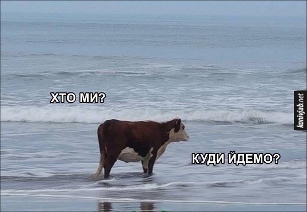 Філософський мем. Корова стоїть на березі, по коліна в воді, дивиться в море і розмірковє: - Хто ми? Куди йдемо?