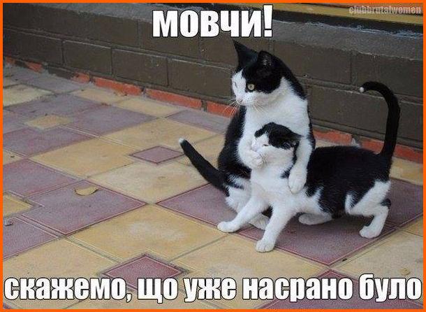 Жарт про двох котів. Один кіт закрив лапою рота іншому і каже: - Мовчи! Скажемо, що уже насрано було