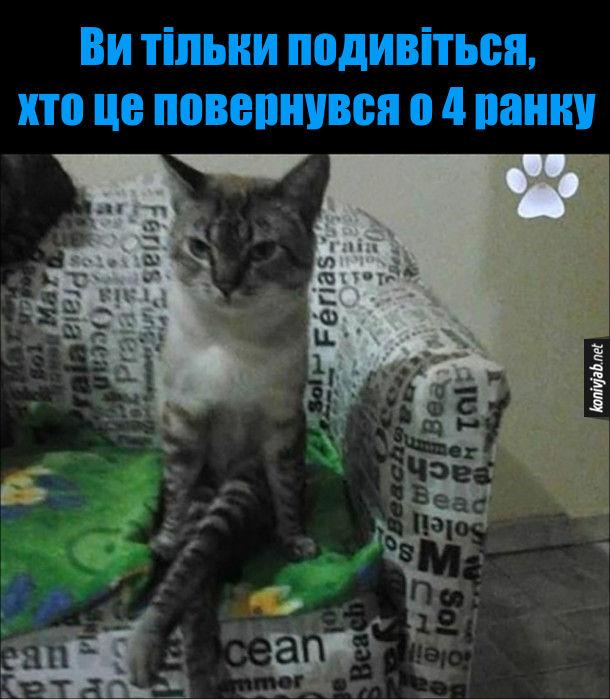 Прикол Прийшов під ранок. Кіт сидить, заклавши ногу на ногу і каже: - Ви тільки подивіться, хто це повернувся о 4 ранку