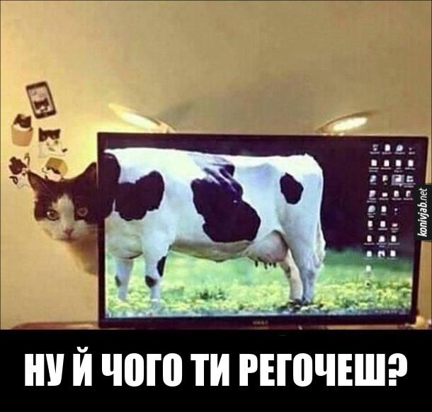 Смішне фіото: Кіт і ноутбук. Кіт виглядає з-за екрану ноутбука, а на екрані шпалери - корова. І виходить, ніби це корова з котячою головою. Кіт: - Ну й чого ти регочеш?