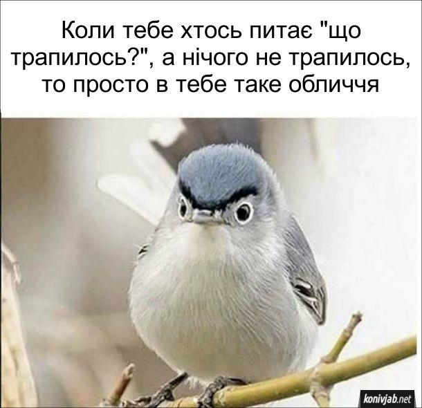 """Смішна пташка з серйозним обличчям. Коли тебе хтось питає """"що трапилось?"""", а нічого не трапилось, то просто в тебе таке обличчя"""