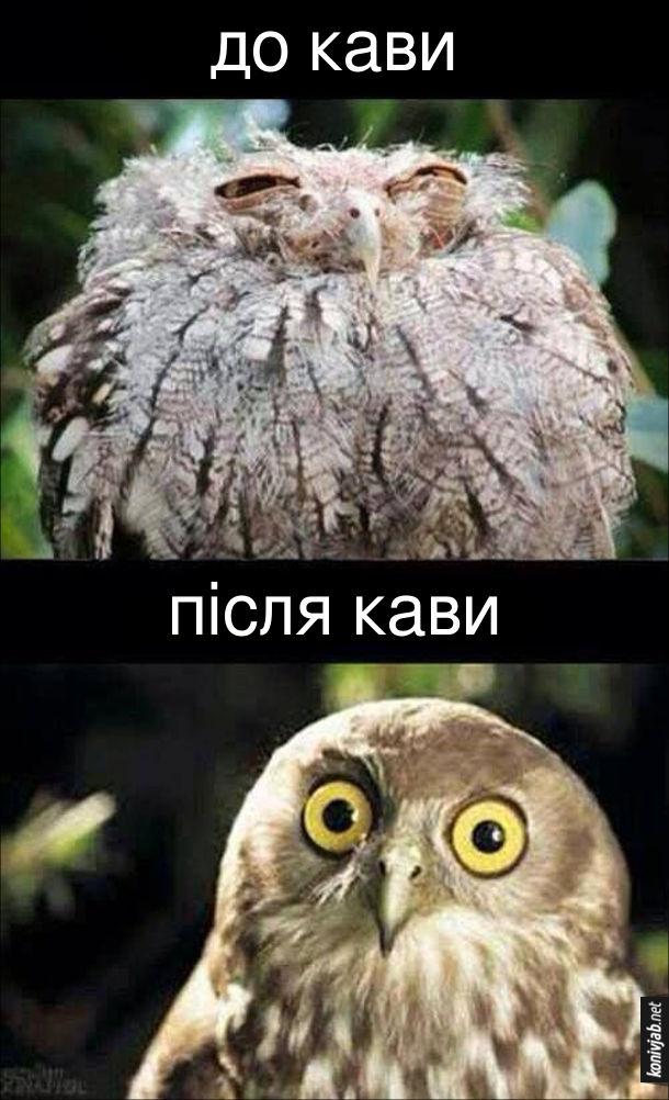 Жарт, як допомагає кава зранку. До кави: заспана розкудлана сова з напівзаплющеними очима. Після кави: сова з широко розплющеними очима