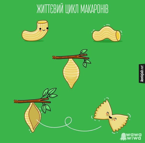 Смішний малюнок про макарони. Життєвий цикл макаронів - від гусениці до метелика