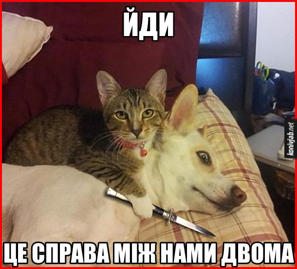 Прикол Кіт з ножем. Зайшов до кімнати, а там кіт тримає ножа біля горла собаки і каже: - Йди, це справа між нами двома
