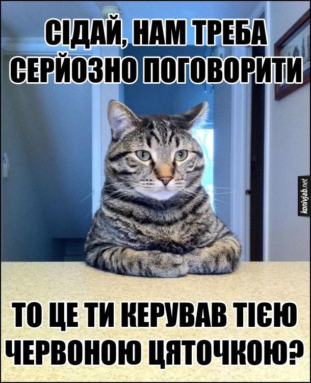 Кіт сидить і каже: - Сідай, нам треба серйозно поговорити. То це ти керував тією червоною цяточкою?