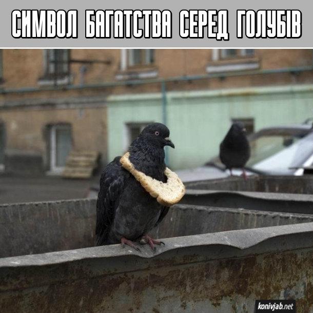 Прикол про голубів. Символ багатства серед голубів. В голуба на шиї висить скибка хліба