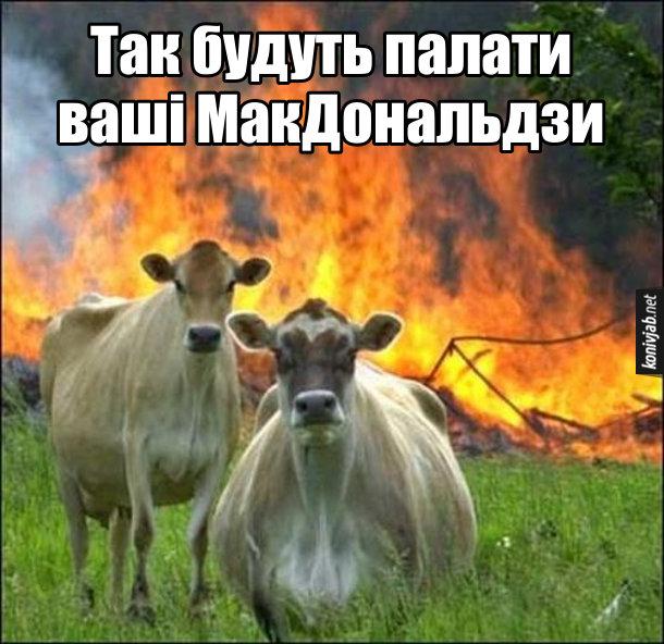 Мем з коровами. Корови на тлі палаючого будинку. Корови: - Так будуть палати ваші МакДональдзи