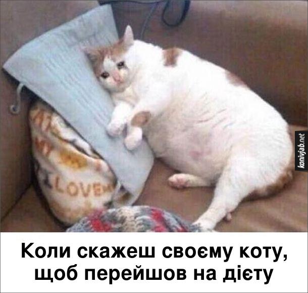 Прикол Гладкий кіт. Коли скажеш своєму коту, щоб перейшов на дієту