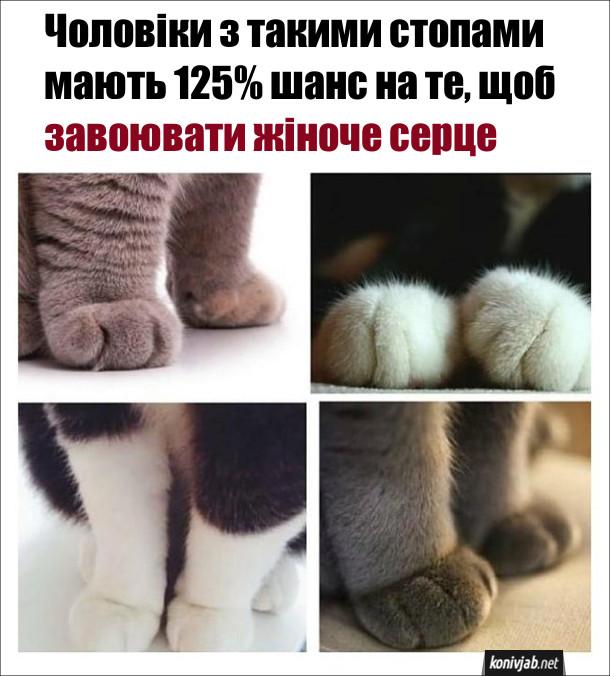 Мем про котячі ніжки. Чоловіки з такими стопами мають 125% шанс на те, щоб завоювати жіноче серце