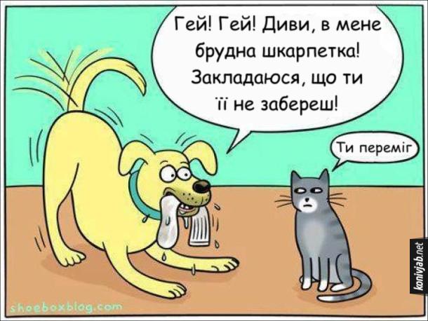 Прикол про собаку і кота. Собака тримає в руках шкарпетку і захоплено гукає до кота: - Гей! Гей! Диви, в мене брудна шкарпетка! Закладаюся, що ти її не забереш! Кіт, байдуже: - Ти переміг