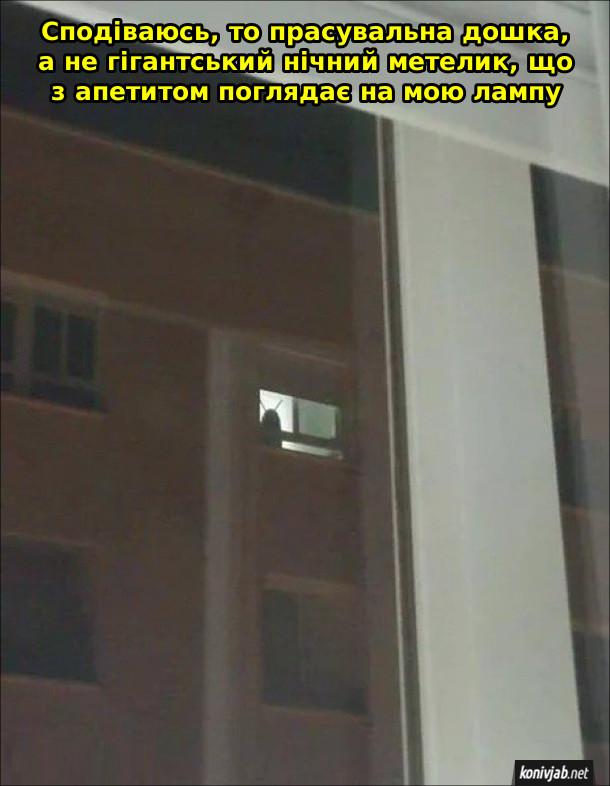 Смішна тінь у вікні, схожа на якусь істоту з ріжками. Сподіваюсь, то прасувальна дошка, а не гігантський нічний метелик, що з апетитом поглядає на мою лампу