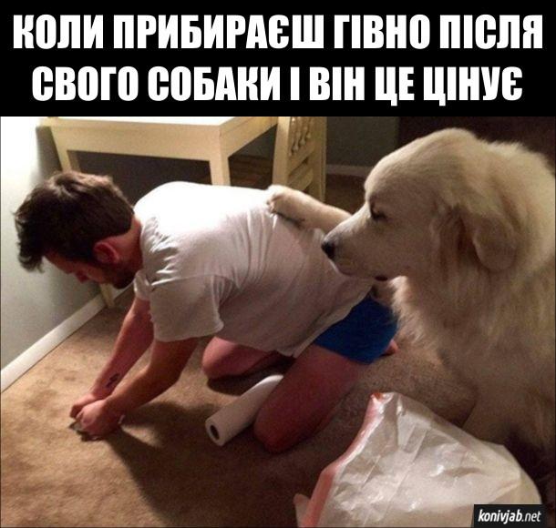 Мем прибирання гівна за собакою. Коли прибираєш гівно після свого собаки і він це цінує (поклав свою лапу на спину господаря)