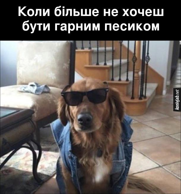 Смішний пес-хуліган, одягнений в джинсовий желет і темні окуляри. Коли більше не хочеш бути гарним песиком