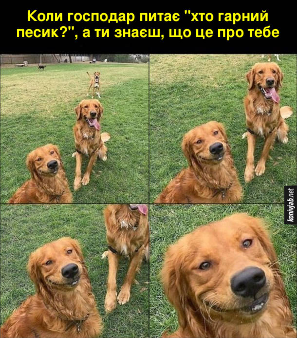 """Прикол Собака усміхається. Коли господар питає """"хто гарний песик?"""", а ти знаєш, що це про тебе"""