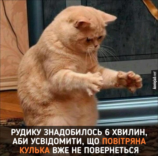Прикол Кіт і повітряна кулька. Рудику знадобилось 6 хвилин, аби усвідомити, що повітряна кулька вже не повернеться. Кіт стоїть розставивши передні лапи