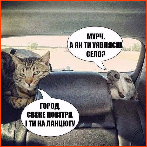 Жарт Собака і кіт. Собака: - Мурч, а як ти уявляєш село? Кіт: - Город, свіже повітря, і ти на ланцюгу