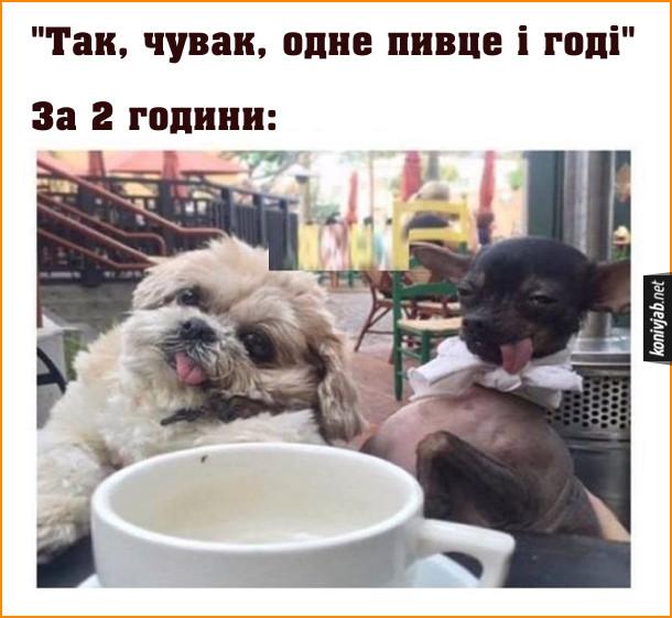Два смішних собаки. Так, чувак, одне пивце і годі. За дві години вже п'яні. На фото: два собакиякі ніби п'яні