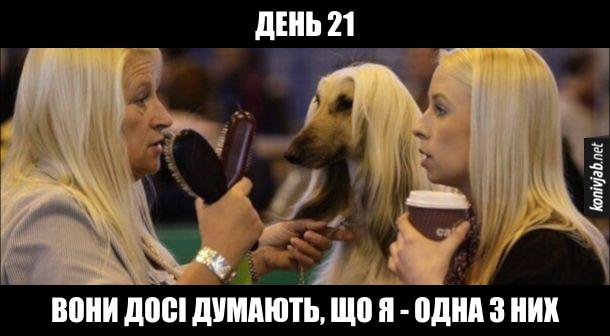 Прикол Собака з довгим волоссям поряд з двома жінками-білявками. День 21. Вони досі думають, що я - одна з них