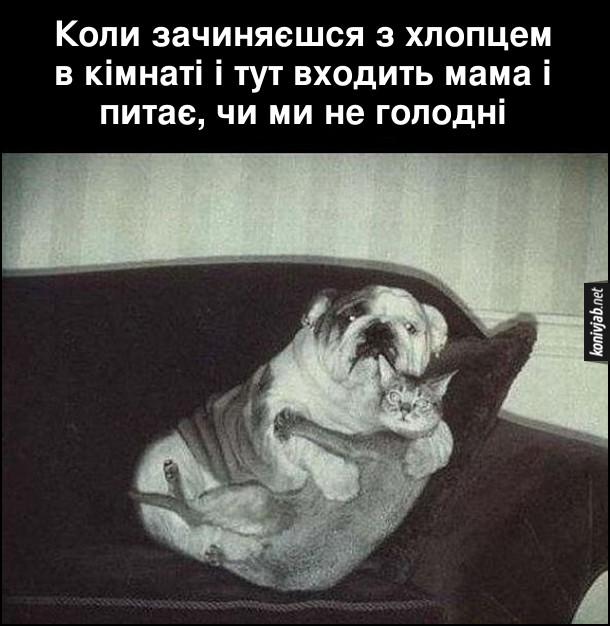 Смішне про собаку і кота. Коли зачиняєшся з хлопцем в кімнаті і тут входить мама і питає, чи ми не голодні. На фото: захоплені зненацька кіт і пес обіймаються