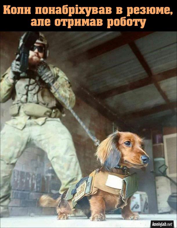 Прикол Собака спецпризначинець. Коли понабріхував в резюме, але отримав роботу. Маленький песик працює у відділі спецпризначення