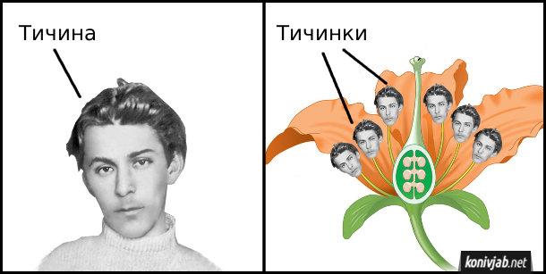 Мем Тичина і тичинки