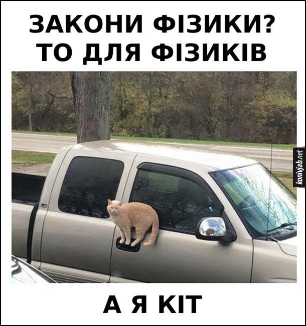 Прикол Кіт в дивній позі. Кіт якимсь дивним чином сидить на дверній ручці автомобіля. Кіт: - Закони фізики? То для фізиків. А я кіт