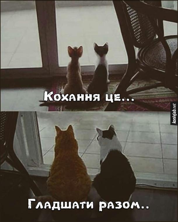 Прикол Кіт і кицька. Кохання це... Гладшати разом. Двоє кошенять дивляться надвір. На іншому фото - ті ж кошенята, але вже дорослі і гладкі