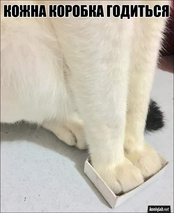 Смішне фото Кіт в сірниковій коробці. Кожна коробка годиться