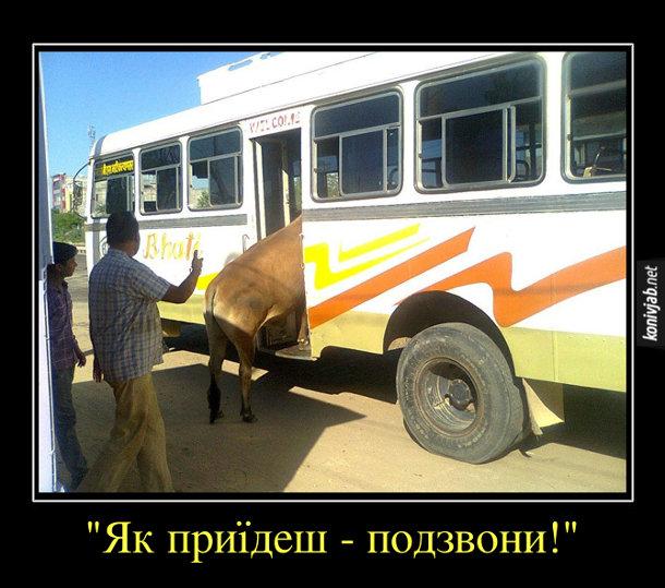 """Демотиватор про Індію. В індійський автобус влазить корова. Чоловіки проводжають її: """"Як приїдеш - подзвони!"""""""
