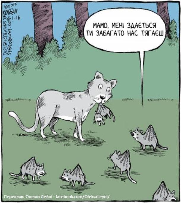 Смішне про кішку і кошенят. Кошеня до мами: - Мамо, мені здається ти забагато нас тягаєш.  У всіх кошенят здійнята догори