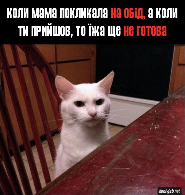 Мем Мама покликала за стіл. Коли мама покликала на обід, а коли ти прийшов, то їжа ще не готова. На стільчику за столом сидить незадоволений кіт