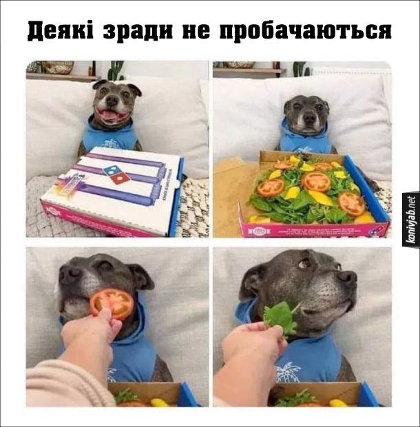 Прикол Собака і вегетаріанство. Песику принесли коробку з піцою. Коли відкрили коробку, там замість піци був овочевий салат. Песик засумував. Деякі зради не пробачаються