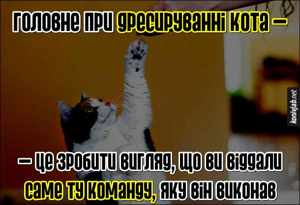 Анекдот дресирування котів. Головне при дресируванні кота - це зробити вигляд, що ви віддали саме ту команду, яку він виконав