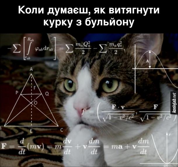 Мем з котом. Коли думаєш, як витягнути курку з бульйону