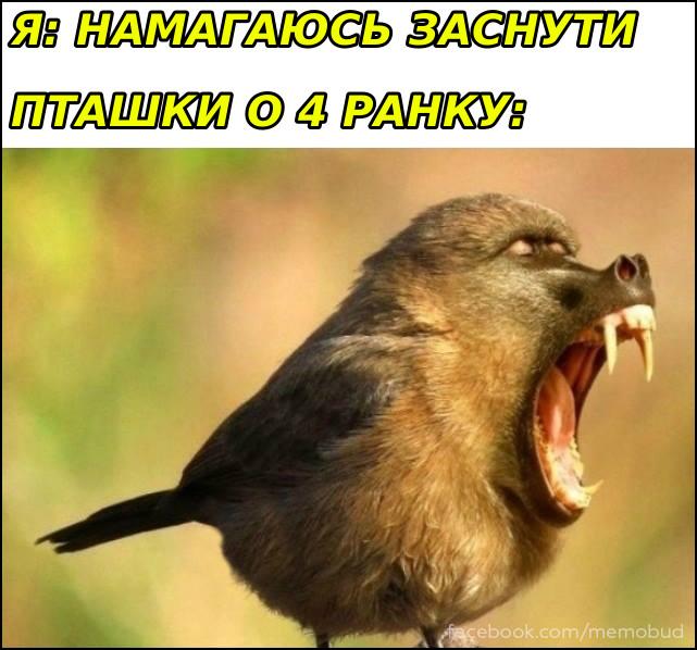Прикол Пташки заважають спати. Я: Намагаюсь заснути. Пташки о 4 верещать ніби мавпи