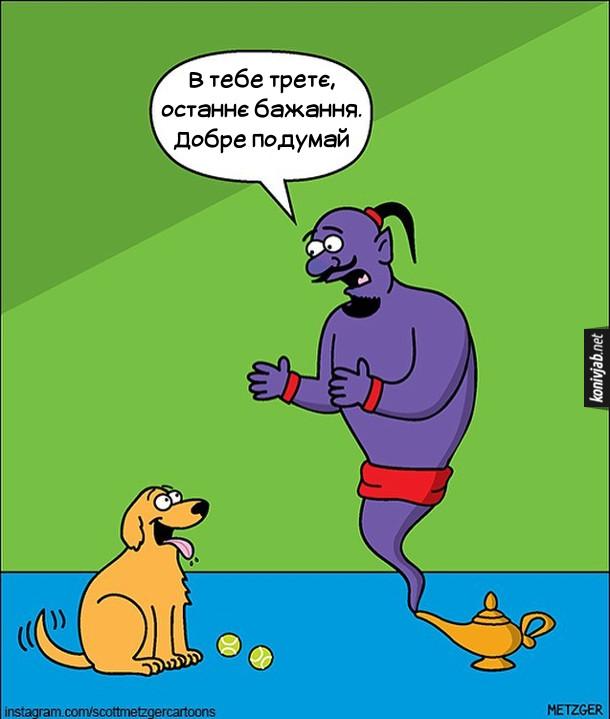 Смішний малюнок Джин і пес. Джин до собаки: - В тебе третє, останнє бажання. Добре подумай. (Пес вже використав два бажання - двічі забажав тенісний м'ячик)