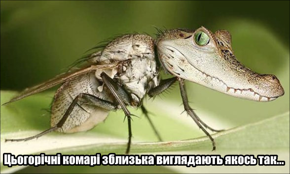 Прикол Комарі. Цьогорічні комарі зблизька виглядають якось так... Комарі з крокодилячою головою