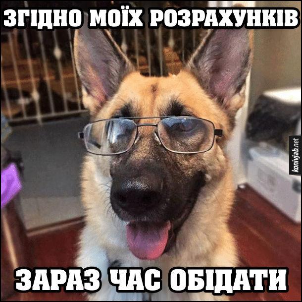 Мем пес-науковець в окулярах. Згідно моїх розрахунків, зараз час обідати