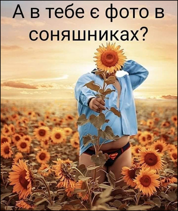 Прикол Фото в соняшниках. А в тебе є фото в соняшниках? Пузатий чоловік на соняшниковому полі з соняшником в руках