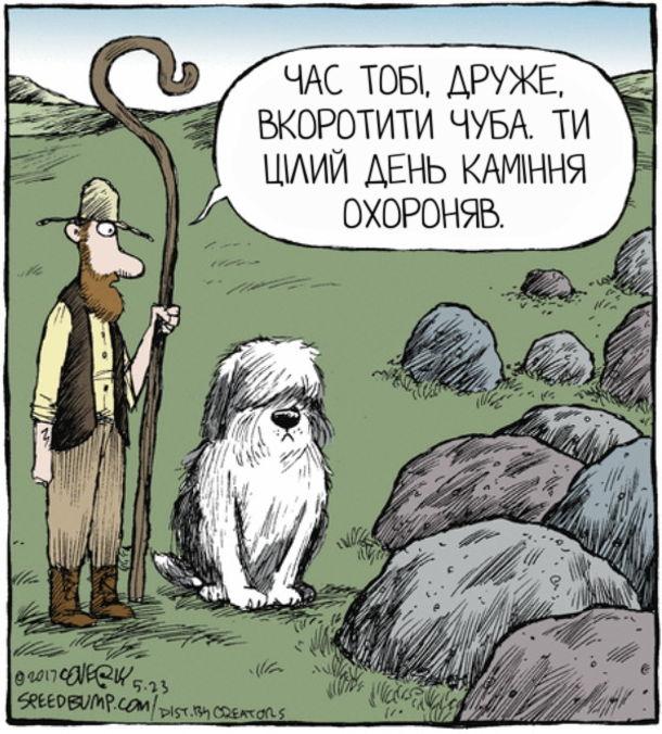Прикол собака-вівчар. До собаки породи комондор (чи української вівчарки) підходить чабан. - Час тобі, друже, вкоротити чуба. Ти цілий день каміння охороняв.