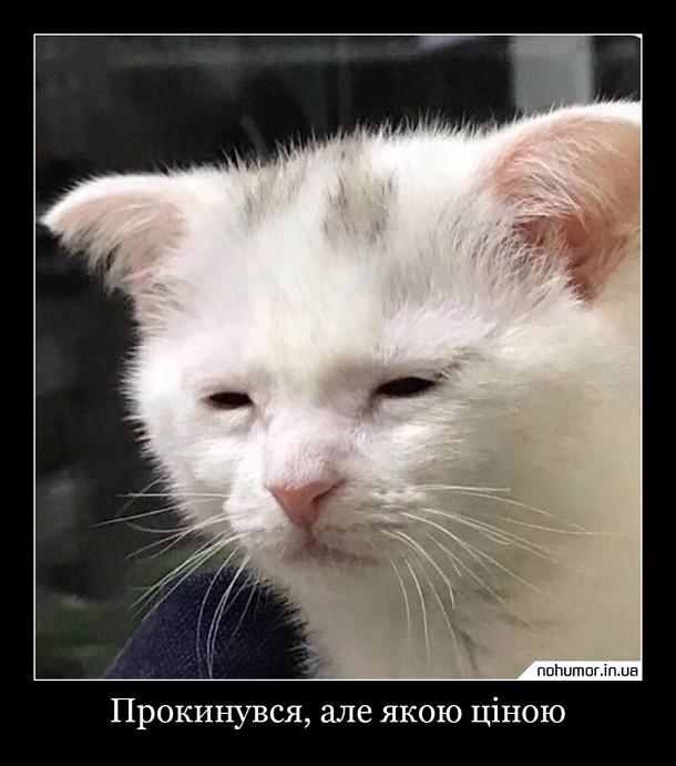 Мем Прокидання. Заспаний кіт. Прокинувся, але якою ціною