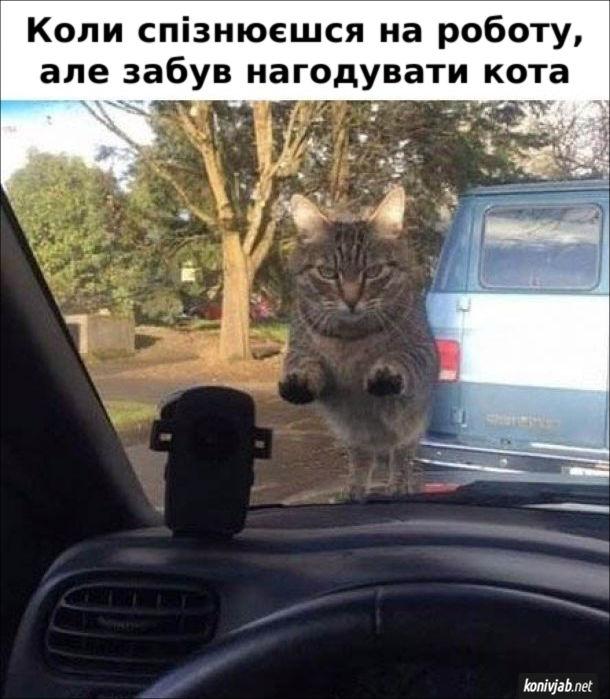 Мем Не погодував кота. Коли спізнюєшся на роботу, але забув нагодувати кота. Кіт виліз на капот автомобіля і суворо дивиться у вікно.