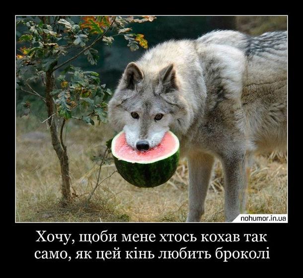 Демотиватор про вовка. Хочу, щоби мене хтось кохав так само, як цей кінь любить броколі. На фото: вовк тримає в зубах кавуна